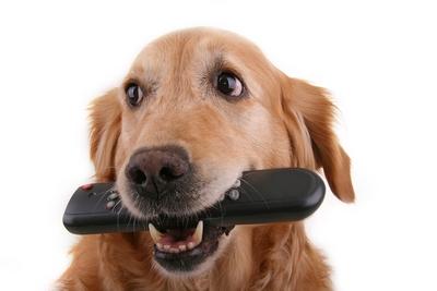 pas - upravljac - tv oglasavanje