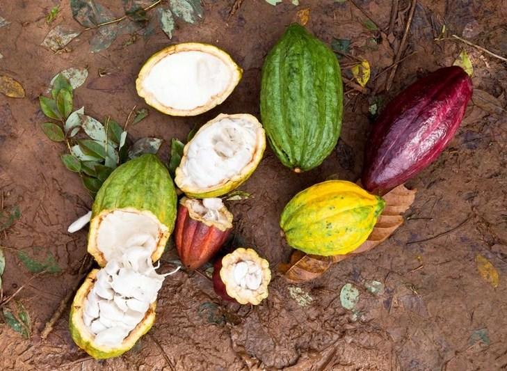 mars-kakao-proizvodnja-001