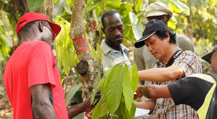 mars-kakao-proizvodnja-002