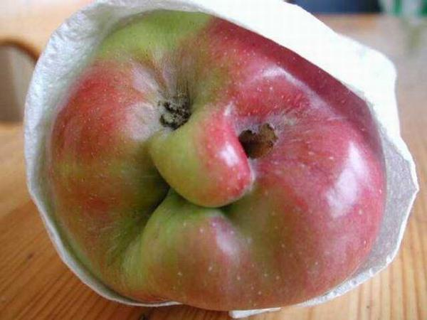 nesavrsena jabuka-granny smith