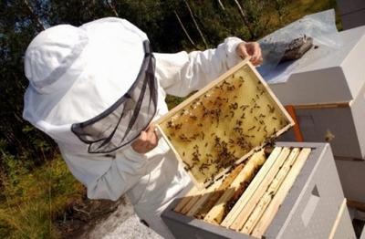 pcelar-pcelarstvo-med