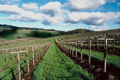 poljoprivreda-hrvatska-midi