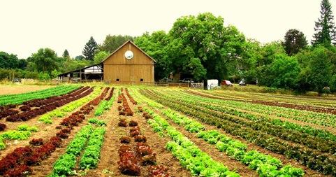 poticaji_poljoprivreda