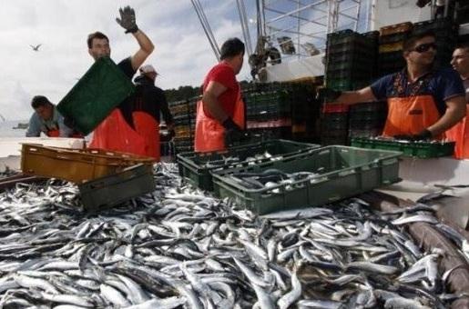 ribari-potpore-midi