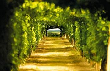 vinske-ceste-midi